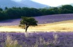 Provence. Forcalquier